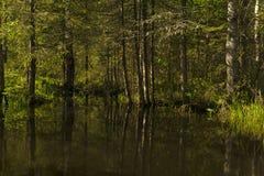Klein bosmeer in de schaduw van bomen royalty-vrije stock fotografie