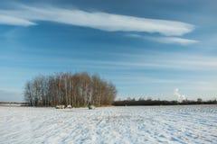 Klein die bosje en gebied met sneeuw, witte wolken op hemel wordt behandeld royalty-vrije stock foto's