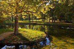 Klein eiland met een boom, vijver in Topcider-park, Belgrado Stock Foto's
