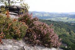 Klein flard van purpere bloemen op bergrand royalty-vrije stock foto's