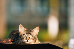 Klein Gray Cat Kitten Resting On Old Roof in Sunny Summer Day royalty-vrije stock afbeelding