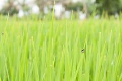 Klein insect Royalty-vrije Stock Afbeeldingen