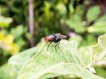 Klein insect in de tuin Stock Foto