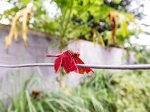 Klein insect in de tuin Stock Foto's