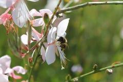 Klein insect op de bloem Stock Afbeeldingen