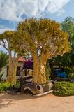 Klein Karas, Namibia - July 11 2014: Quiver trees growing in between abandoned classic car in garden of Canon Roadhouse.  stock photos