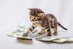 Klein katje dichtbij dollars Tellende inkomens, winst van busine stock foto