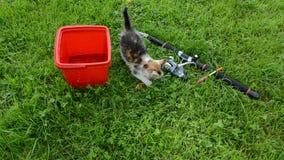 Klein katje die vissen na visserij eten stock videobeelden