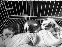 klein katje drie met grijze schaal Stock Fotografie