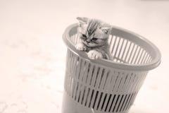 Klein katje in een mand Stock Fotografie