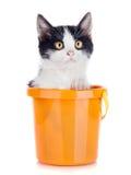 Klein katje in emmer die op wit wordt geïsoleerd? Royalty-vrije Stock Afbeeldingen