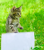 Klein katje op gras Royalty-vrije Stock Foto