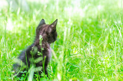 Klein katje op gras Royalty-vrije Stock Foto's