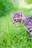 Klein katje op gras Royalty-vrije Stock Afbeelding