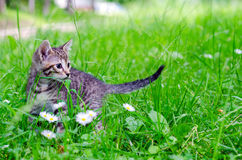 Klein katje op gras Royalty-vrije Stock Fotografie
