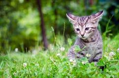 Klein katje op gras Stock Afbeeldingen
