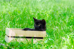 Klein katje op gras Stock Foto's