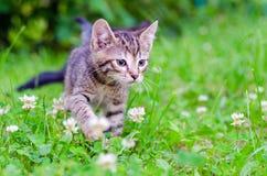 Klein katje op gras Stock Fotografie