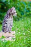 Klein katje op gras Stock Afbeelding