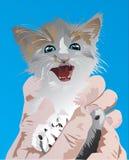 Klein katje op handen Stock Afbeelding