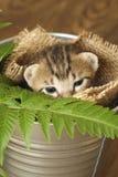 Klein katje slaperig in de emmer royalty-vrije stock afbeeldingen