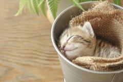 Klein katje slaperig in de emmer stock afbeelding