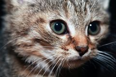 Klein kattenportret stock foto's