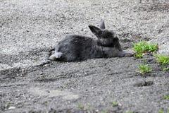 Klein konijn in het zand royalty-vrije stock foto's