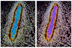 Klein Kristal in gepolariseerd licht Stock Fotografie