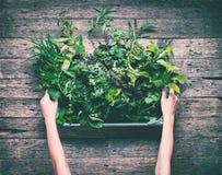 Klein Kruid Gestemd Herb Garden Rustic Wooden Table stock fotografie