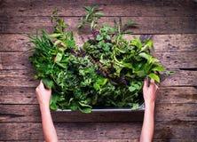 Klein Kruid Herb Garden Rustic Wooden Table royalty-vrije stock afbeeldingen