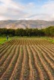 Klein landbouwbedrijf Stock Afbeeldingen