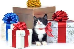 Klein leuk katje met giftdoos royalty-vrije stock foto