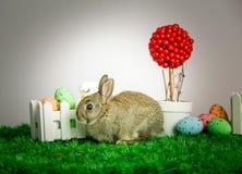 Klein leuk konijntje met paaseieren Stock Foto's