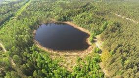 Klein meer in de bos Luchtmening vanaf de bovenkant stock video