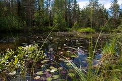 Klein meer in het bos met bezinning, waterlelie en blokhuis, Noorwegen Stock Foto's