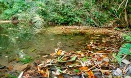 Klein meer met gevallen bladeren in de wildernissen stock foto