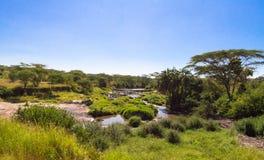 Klein moeras onder savanne Serengeti, Tanzania royalty-vrije stock afbeeldingen