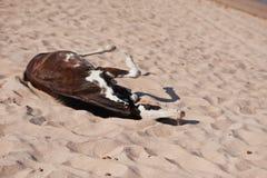 Klein paard op strand het spelen op zand Stock Foto