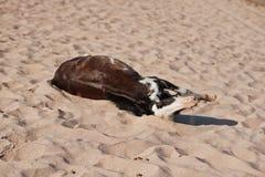 Klein paard op strand het spelen op zand Stock Foto's