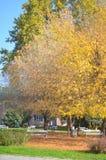 Klein park dat met de herfstbladeren wordt behandeld Royalty-vrije Stock Afbeelding