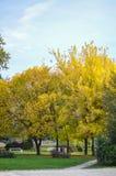 Klein park dat met de herfstbladeren wordt behandeld Royalty-vrije Stock Foto