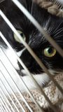 Klein pluizig katje achter de tralies royalty-vrije stock foto's