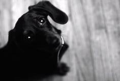 Klein puppy stock foto