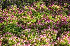 Klein purper bloemengebied in de tuin royalty-vrije stock foto's