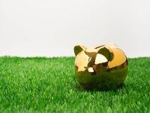 Klein spaarvarken achter een klein flard van vers gras Piggy goud stock foto