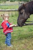Klein voedend paard jong meisje Stock Foto's