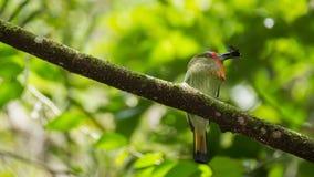 Klein weinig groene vogel Stock Afbeeldingen