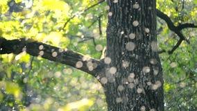 Klein wit insecten midges close-up in het bos stock videobeelden