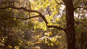 Klein wit insecten midges close-up in het bos stock footage